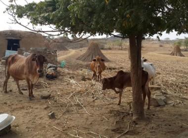 Building resilient rural livelihoods is key to helping Yemen