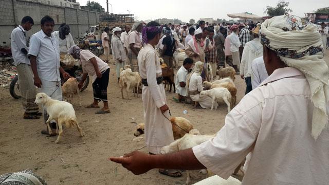 Al Hudaydah, Yemen. A livestock market. Credit: FAO/Chedly Kayouli