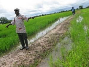 Rice fields in Northern Ghana. Credit: Isaiah Esipisu/IPS