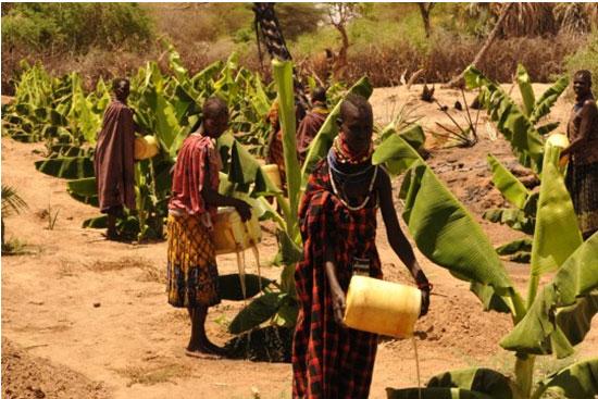 Turkana women water their banana field from the nearby River Turkwel. Credit: UNDP Kenya
