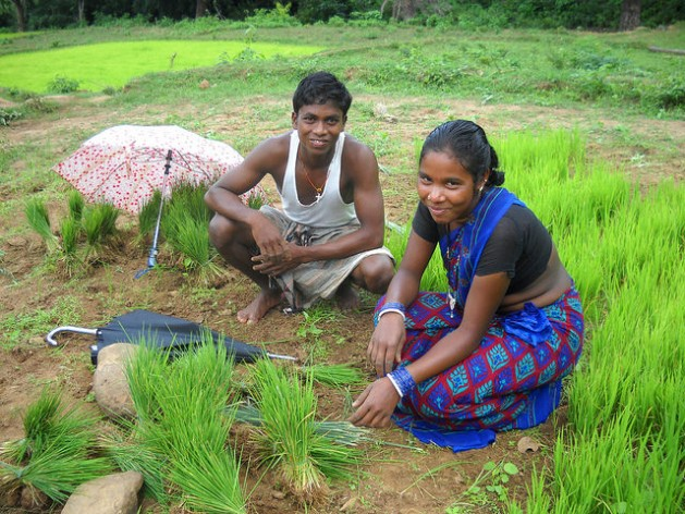 Women's secure tenure rights lead to several positive development outcomes for them and their families, including resilience to climate change shocks, economic productivity, food security, health, and education. Here a young tribal woman works shoulder to shoulder with her husband planting rice saplings in India's Rayagada province. Credit: Manipadma Jena/IPS