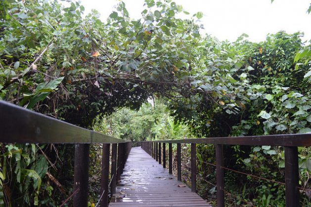 In Cahuita National Park, in Costa Rica's southeastern province of Limón, an elevated walkway was built through the forest to allow visitors to enjoy the scenery and to avoid the vulnerable coastal road that is being slowly eroded by the waves of the Caribbean Sea. Credit: Diego Arguedas Ortiz / IPS