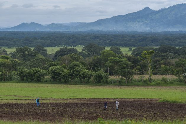 Peasant farmers on a farm in the town of Sébaco, in the northern Nicaraguan department of Matagalpa, part of the Dry Corridor of Central America, where this year rains have been generous, after years of drought. Credit: Wilmer López/IPS