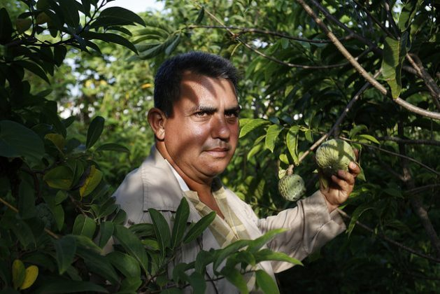 Onay Martínez holds a sugar-apple on his farm, Tierra Brava, in western Cuba, where he practices conservation agriculture and has turned this sustainable system that minimally disturbs the soil into a model in his country. Credit: Jorge Luis Baños/IPS