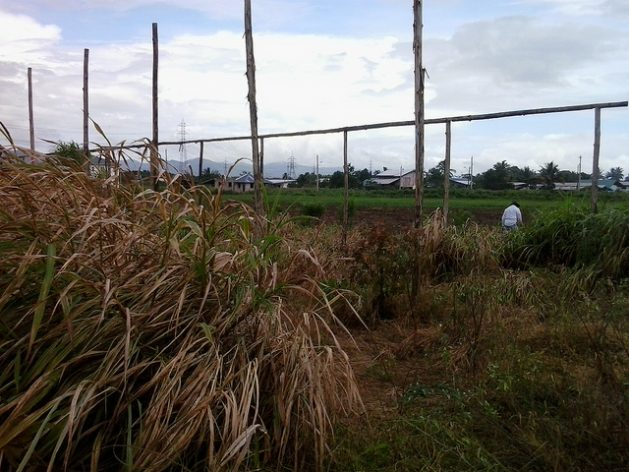 The remains of abandoned shade houses that one farmer attempted to build to protect his crops from the effects of climate change in Trinidad. Credit: Jewel Fraser/IPS