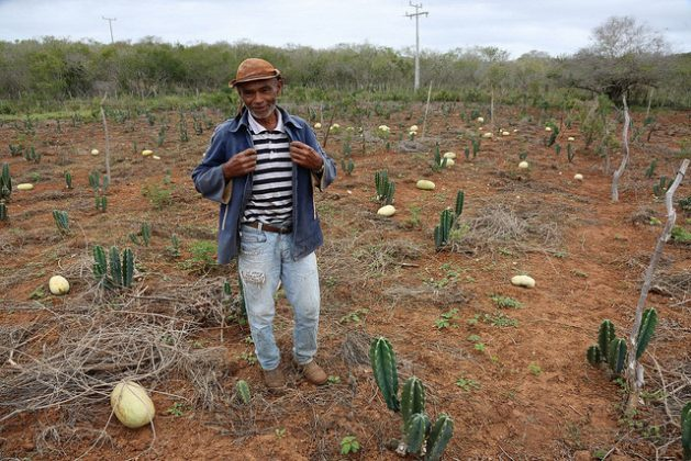 João Afonso stands amidst his watermelons and other forage plants on his farm in the municipality of Canudos, in the state of Bahia, in Brazil's semiarid Northeast. Thanks to water and soil management techniques, the droughts are not so hard on him, his crops or his animals. Credit: Gonzalo Gaudenzi / IPS