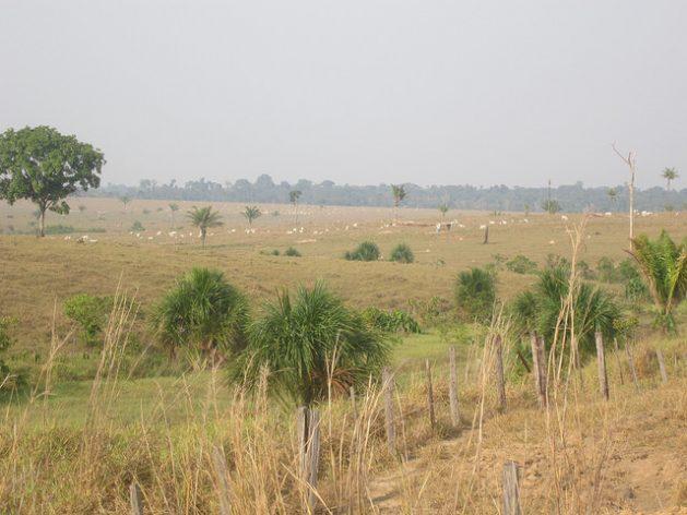 Deforestation due to the expansion of livestock farming dominates the landscape near Alta Floresta, a southeastern gateway to the Brazilian Amazon. Credit: Mario Osava / IPS