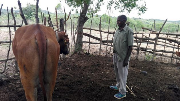 Zambian Farmer Lameck Sibukale showcasing his newly acquired ox, which he bought using earnings from a savings group. Credit: Friday Phiri/IPS