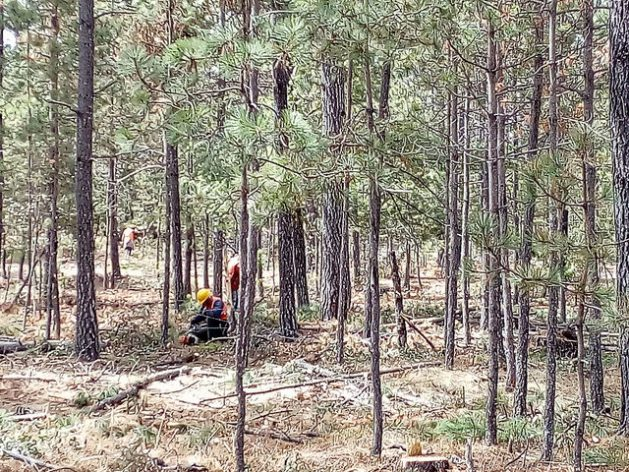 A controlled cut on land in the Pueblo Nuevo ejido, in the northern state of Durango, Mexico. Reforestation and clearing or cutting of older or thinner trees are practices used for growing larger, healthier trees, as well as restoring soil. Credit: Emilio Godoy / IPS