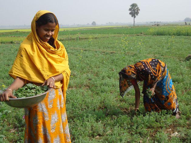 Women farmers clearing farmland in Northern Bangladesh. Credit: Naimul Haq/IPS