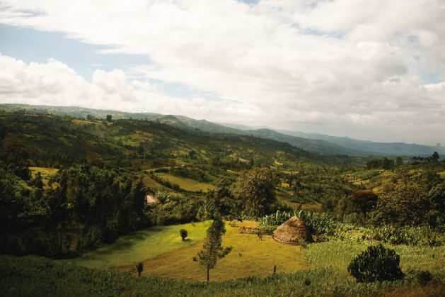 Ethiopia's Green Growth Goals: A Launchpad for Wider Climate Action in Africa