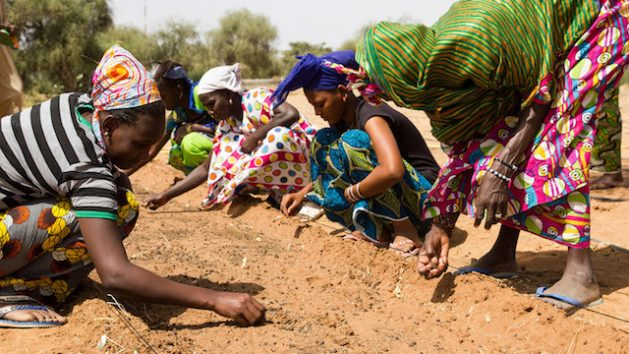 Great Green Wall Brings Hope, Greener Pastures to Africa's Sahel - By 2030 the ambition is to restore 100 million hectares of currently degraded land and sequester 250 million tons of carbon. Credit: Greatgreenwall.org
