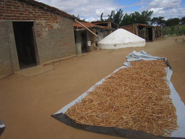 Beans are left to dry in the sun on Pedrina Pereira's small farm. In the background, a tank collects rainwater for drinking and cooking, from the rooftop. It is part of a programme of the organisation Articulation in Brazil's Semi Arid Region (ASA), which aims to distribute one million rainwater tanks to achieve coexistence with the semi-arid climate which extends across 982,000 sq km in Northeast Brazil. Credit: Mario Osava/IPS