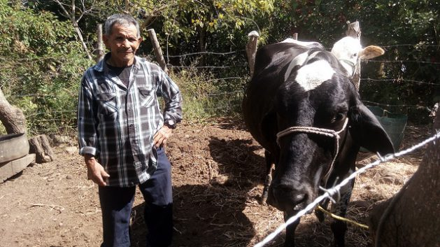 Gilberto Gómez stands next to the cow he bought with the support of his migrant children in the United States,which eases the impact of the loss of his subsistence crops, in the village of La Colmena, Candelaria de la Frontera municipality in western El Salvador. This area forms part of the Central American Dry Corridor, where increasing climate vulnerability is driving migration of the rural population. Credit: Edgardo Ayala/IPS