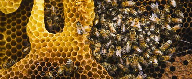 Amazingly organised social communities, bees ensure food chain. 'Bee' grateful to them… at least in their Wold Day!