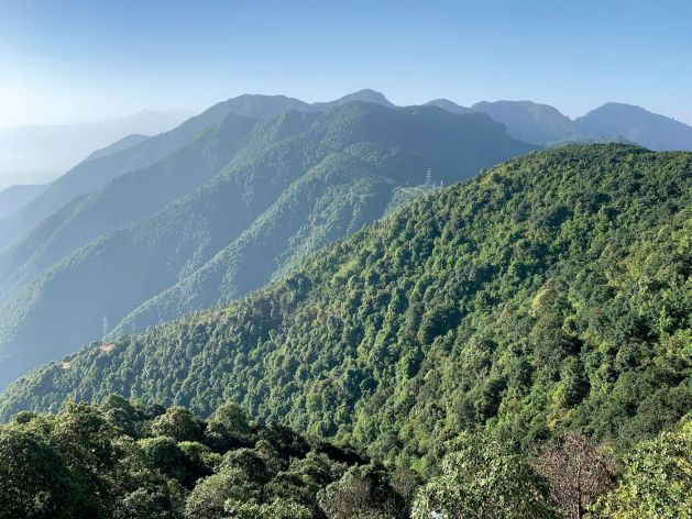 New analysis of historical satellite imagery indicates that Nepal's forest area has nearly doubled, from 26% of land area in 1992 to 45% in 2016. The midhills have experienced the strongest resurgence, although forests have also expanded in the Tarai and in the mountains. This makes Nepal an exception to the global trend of deforestation in developing countries.