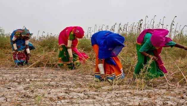New law gives women farmers similar rights as industrial workers The provincial legislation is a first in the vast Indian sub-continent.