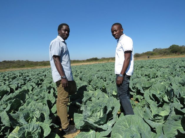 Creating Opportunities to Nurture Agripreneurship among Africa's ...