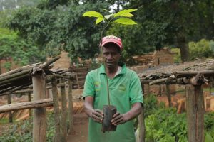 Emmanuel Nsabimana, a casual labourer at the National Tree Seed Centre, in Huye, in Rwanda's Southern Province, has worked planting trees for over 40 years. He believes there has been considerable improvements in the seed quality from the centre since the International Union for Conservation of Nature (IUCN) became one of the contributors to its restoration. Credit: Emmanuel Hitimana/IPS