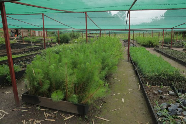 One of many nurseries at Rwanda's National Tree Seed Centre. The centre is tasked with centralising the supply of tree seeds across the country, including establishing new seed sources, improving trees with growth deficiencies, and collecting and certifying seed. Credit: Emmanuel Hitimana/IPS