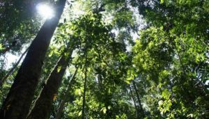 Tropical forests can develop resistance to a warmer climate, but 71 per cent will come under threat in the next decade if global average temperatures reach two degrees Celsius above pre-industrial levels, a new study warns