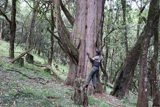 The Ogiek indigenous community who live in Kenya's Mount Elgon forest have conserved the forest's natural ecosystem for centuries. Credit: Isaiah Esipisu/IPS