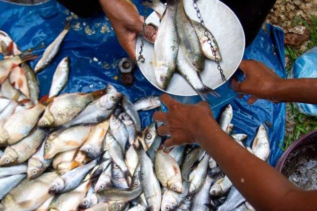 Supporting local demand rather than investing in foreign export-based fisheries will be a step in the right direction.