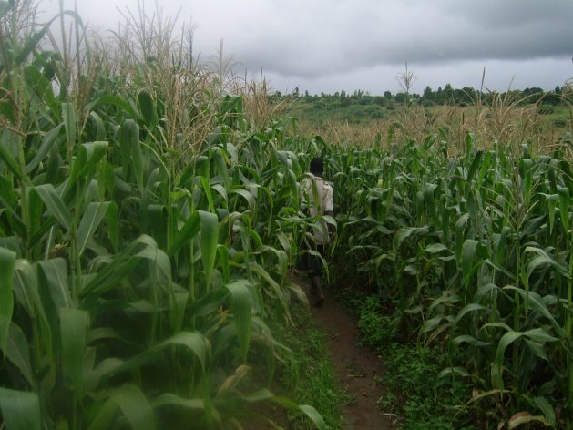 The rural-urban migration of youth household members is leading to loss of labour for agricultural production which was not compensated by hired labour. Courtesy: Charles Mpaka