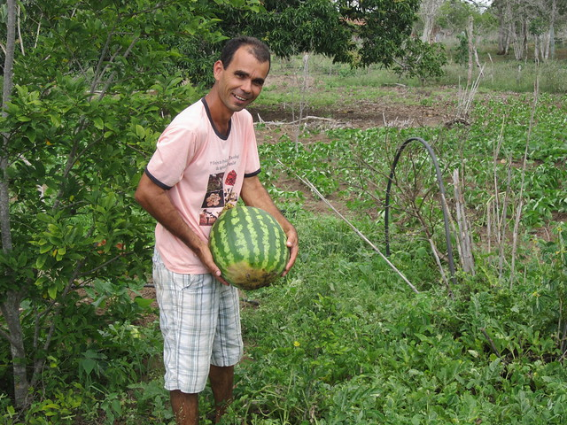 Abel Manto, an inventor of technologies that he uses on his small farm in the state of Bahia, in Brazil's semiarid ecoregion, holds up a watermelon while standing among the bean crop he is growing on top of an underground dam. The soil is on a waterproof plastic tarp that keeps near the surface the water that is retained by an underground dam. CREDIT: Mario Osava/IPS
