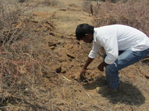 Degraded farmland is being restored in Mahbubnagar district of Telangana state in India. Investing in sustainable land management and reversing land degradation will help build economies post-COVID-19 and help poor people increase their incomes. Credit: Stella Paul/IPS