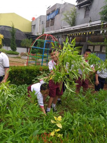 Students at the Santo Markus I Elementary School in East Jakarta, Indonesia, learn how to plant medicinal herbs as part of their green programme. Courtesy Ruben Kharisma