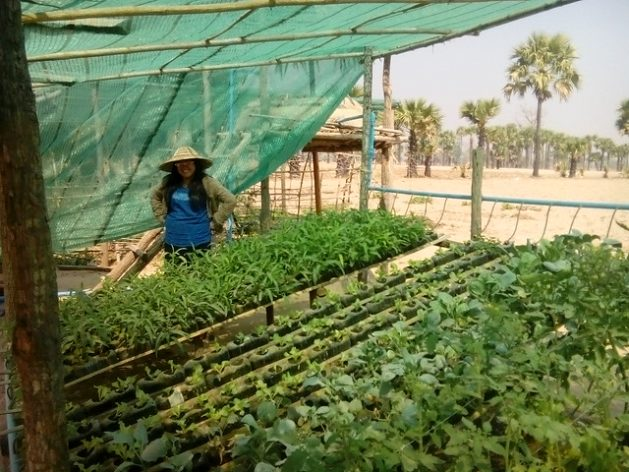Protecting and improving food systems will be vital to reduce the risk of people falling into food insecurity, the United Nations says. Credit: Sara Perria/IPS