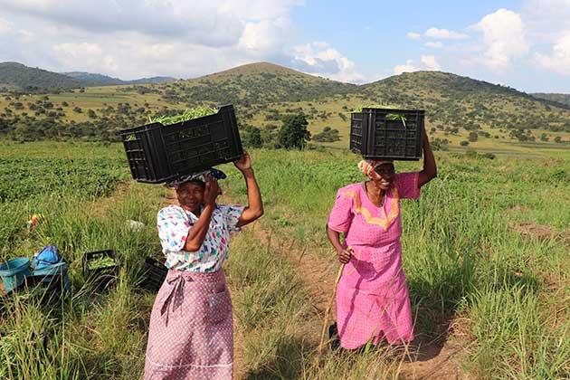 ipsnews.net - Digitisation Could Transform African Agriculture
