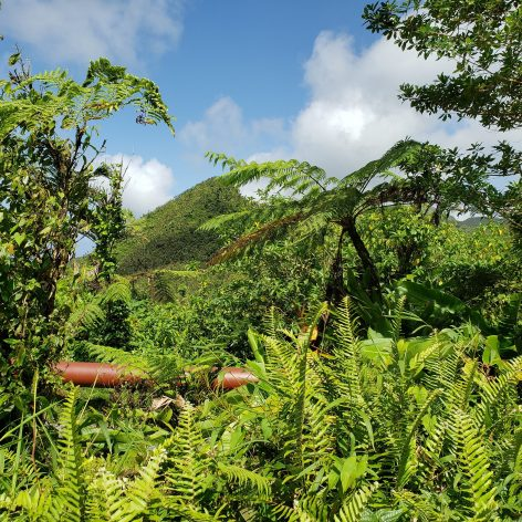 Forest on the island of Dominica. With 54% support, the conservation of forests was the most popular climate action policy selected by participants in the Peoples' Climate Vote. It was the world's largest climate change public poll. Credit: IPS/Alison Kentish