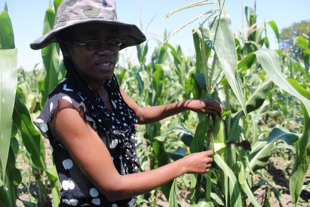Young farmers who have land are failing to access bank loans despite the Zimbabwean government touting farming as the final frontier that will guarantee the country's food security needs. Credit: Busani Bafana/IPS