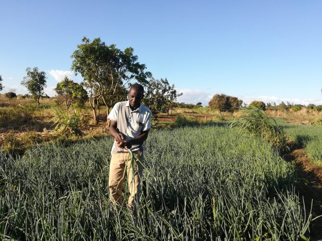 Youths like Feston Zale from Chileka area in Blantyre district of Malawi's Southern Region are finding employment and a source of income in agribusiness. Credit: Esmie Komwa Eneya/IPS