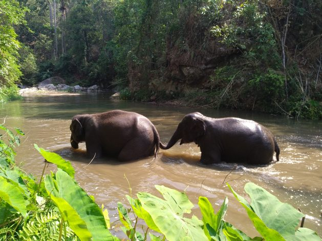 Two elephants cross a stream in Malai Mahadeshwara Hills Wildlife Sanctuary. Thanks to a number of conservation projects run by various government agencies, non-government organisations and the International Union for Conservation of Nature (IUCN), the wildlife population is thriving again. The forest is now home to an estimated 500 elephants and several other big game animals, including bison and tigers. Credit: Stella Paul/IPS