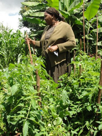 Farmers like Peris Wanjiku continue to battle climate-related risks at a more frequent and intense rate. Credit: Joyce Chimbi/IPS