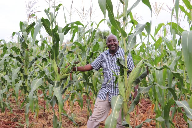 Justus Kimeu on his farm in Kithiani village, Makueni County, Kenya. By using the regenerative agriculture (RA) technique this farmer produced a bumper maize harvest during a very dry season. Almost 900 farmers in Kenya's two dryland counties of Embu and Makueni are participating in a pilot project to see how regenerative agriculture can be used to improve food productivity. Credit: Isaiah Esipisu/IPS