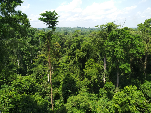 The Kakum National Park in Ghana is a semi-deciduous rainforest. Credit: Stella Paul/IPS