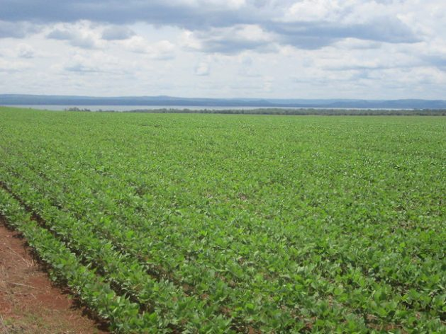 The monotony of soybean monoculture dominates the landscape in many areas of Mato Grosso and other Brazilian states. The regularity of rains in the Cerrado biome – Brazil's savannah - favours this crop at the start of the rainy season, in September or October, and allows a second planting of corn or cotton before the dry season. CREDIT: Mario Osava/IPS
