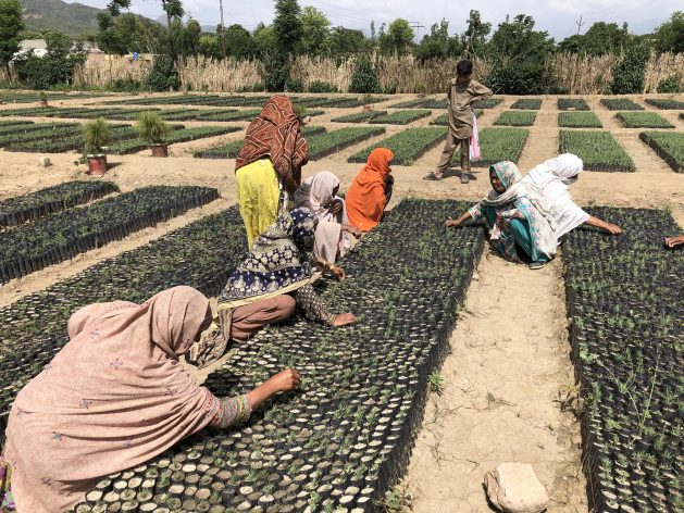 Women working in government-owned nurseries in Haripur, in Khyber Pakhtunkhwa province, Pakistan. Pakistan has launched one of the largest reforestation initiatives in the world — the Ten Billion Tree Tsunami Programme. Credit: Zofeen T. Ebrahim/IPS