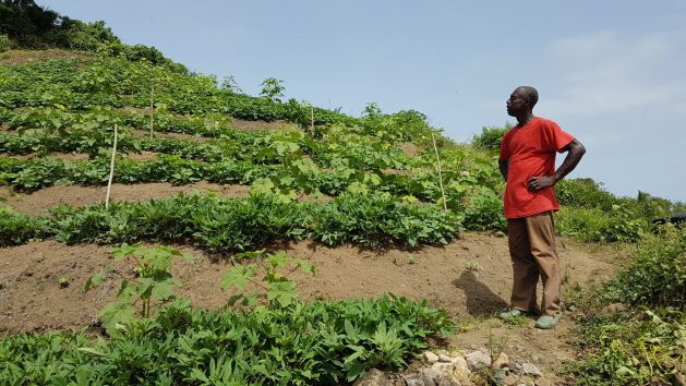 A Saint Lucian farmer surveys his crops, during the annual dry season. Amid reports that half of the earth's agricultural land is degraded, countries are reporting on progress to halt land degradation. Credit: Alison Kentish/IPS