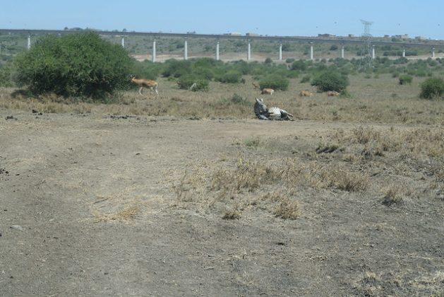 View of Standard Gauge Railway, at Mlolongo from Nairobi National Park, Kenya. Credit: Backrop Ke / Flickr