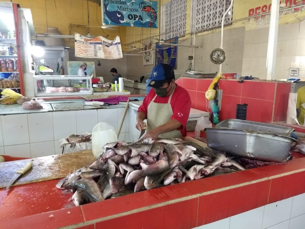 Since at least 2016, Mexico has become a strong seller of shark fins to China and Hong Kong, under the Convention on International Trade in Endangered Species of Wild Fauna and Flora (CITES) mechanisms