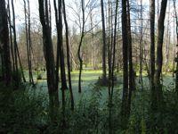 Bialowieza forest. Credit: Robert Stefanicki