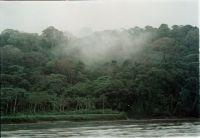 A cloud forest in Costa Rica. Credit: Germán Miranda/IPS