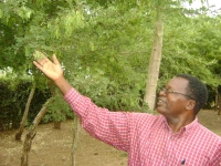 Sebastian Chuwa harvesting African blackwood seeds near Moshi. Credit:  Denis Gathanju/IPS