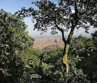 Nchisi Forest Reserve, Malawi Credit:  Thomas Wagner/Wikicommons