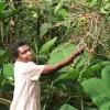 Farmer Sera Nafungo picking coffee berries in Bukalasi, eastern Uganda. Credit: Wambi Michael/IPS